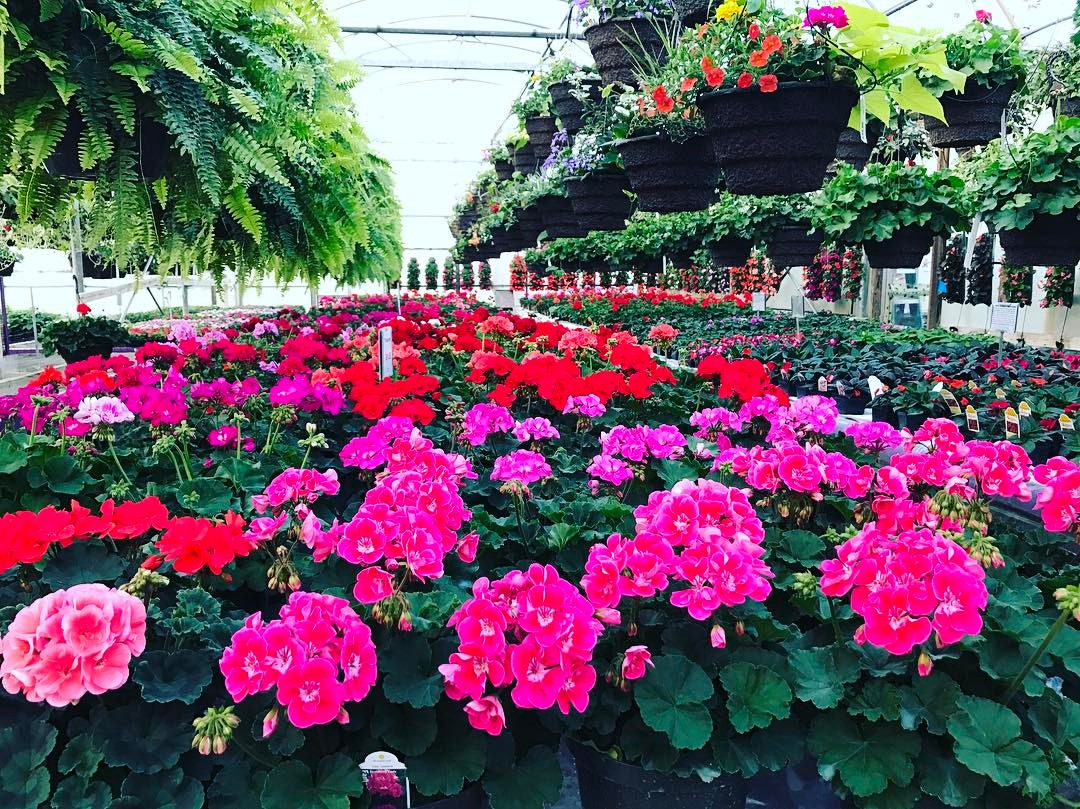 Greenhouse Miller Flowers Greenhouse Greenville Oh Miller Flowers