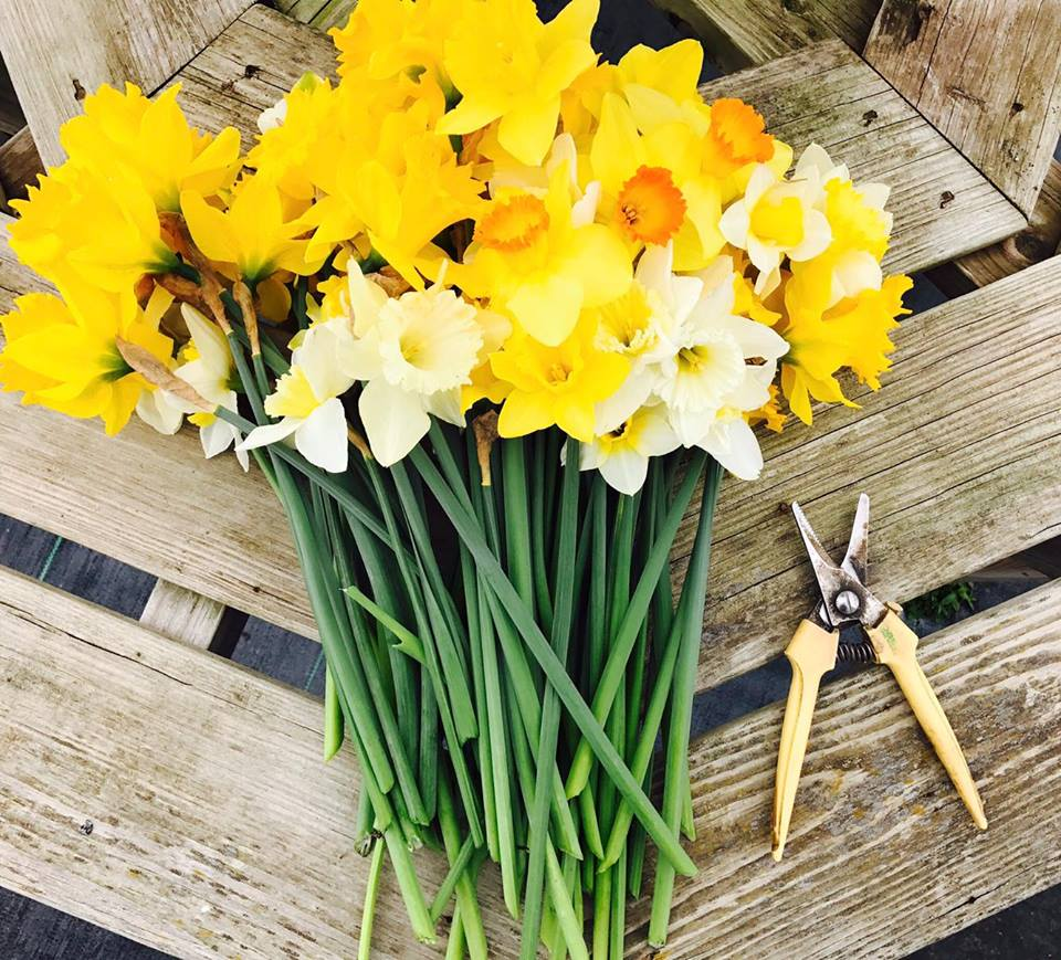 Monthly spring flower bouquet subscription monthly spring flower bouquet subscription izmirmasajfo